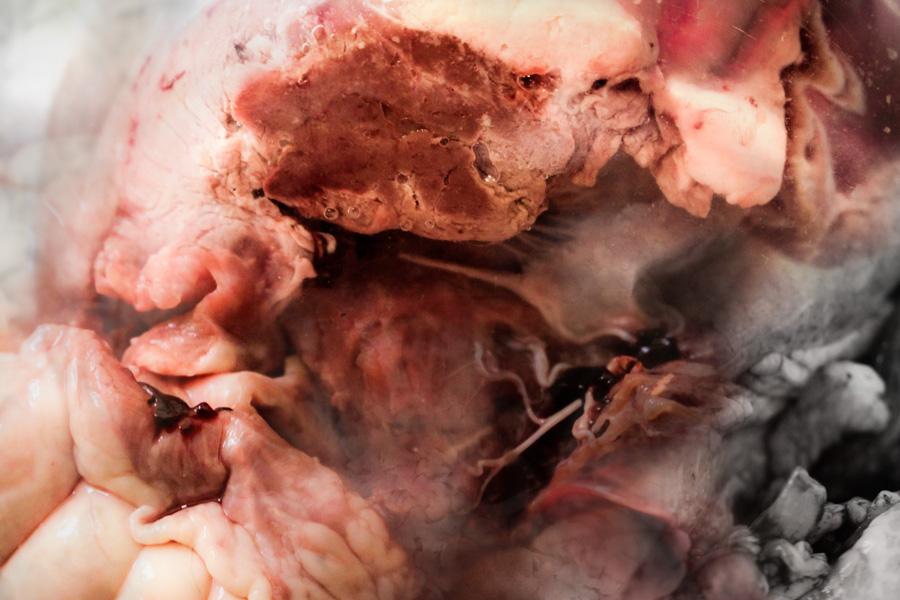 organ-layers-1