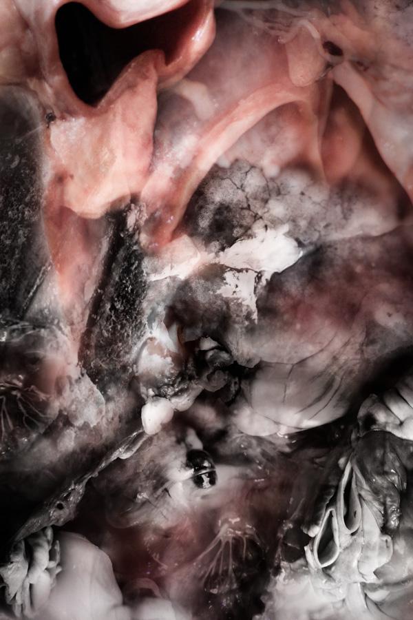 organ-layers-3