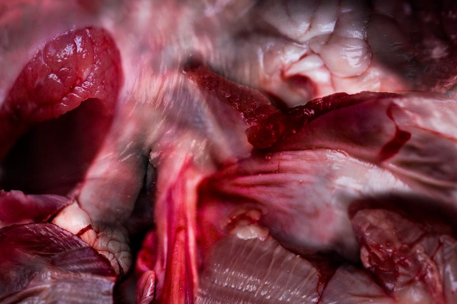 organ-layers-4